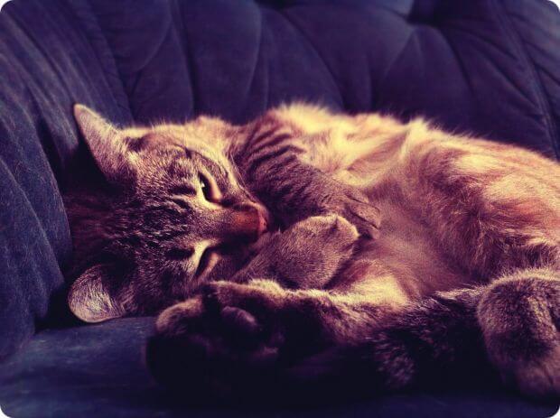 Красивый кот на диванчике