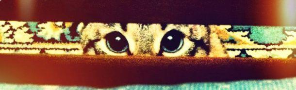 Животные Айфонография