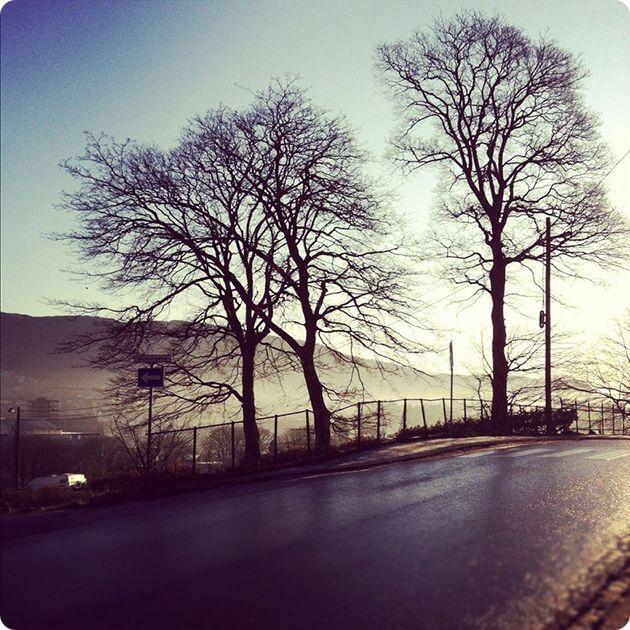 Одинокие деревья на дороге